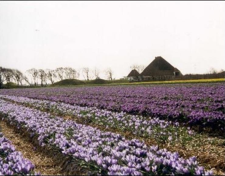 Nieuw-Breda