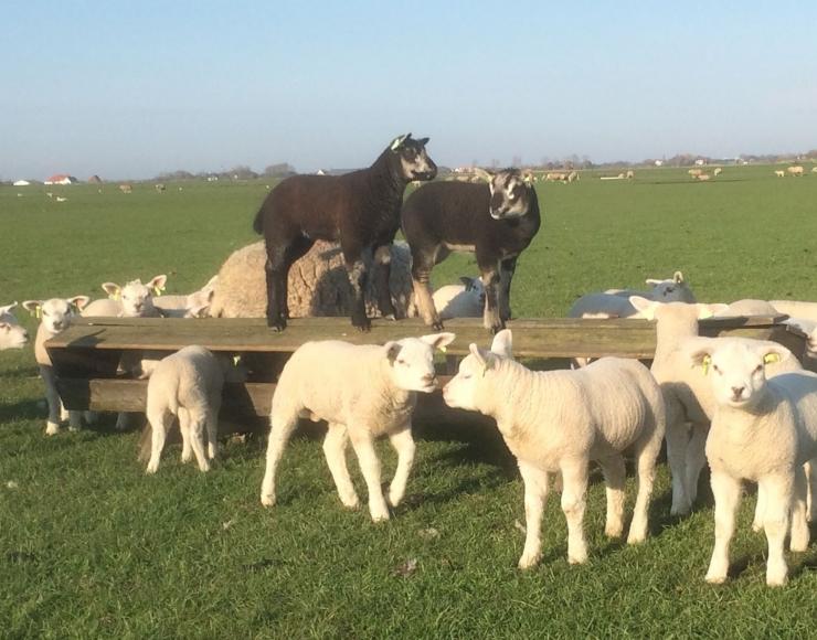 Lindehoeve boerderijcamping